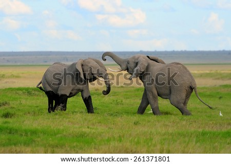 Elephant in National Park Kenya, Africa - stock photo