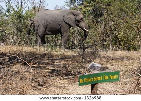 Elephant in park - stock photo