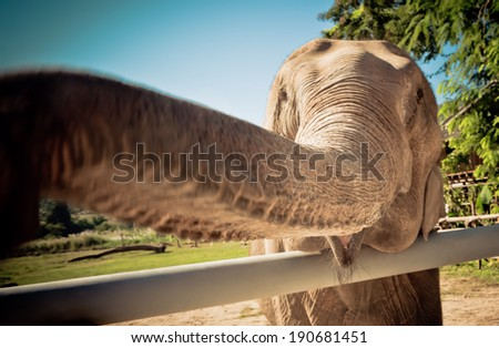 Elephant in Sanctuary