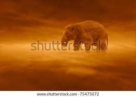 Elephant in surreal landscape - stock photo