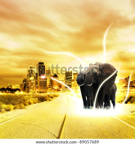 Elephant in the city - stock photo