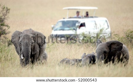 Elephant in the grass in the Masai Mara Reserve (Kenya) - stock photo