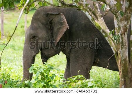 Elephant in the jungle.