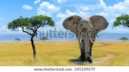 Elephant in the national park in Kenya, Africa - stock photo