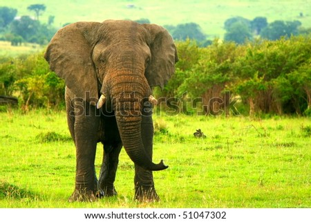Elephant in the wild. Africa. Kenya. Masai Mara - stock photo