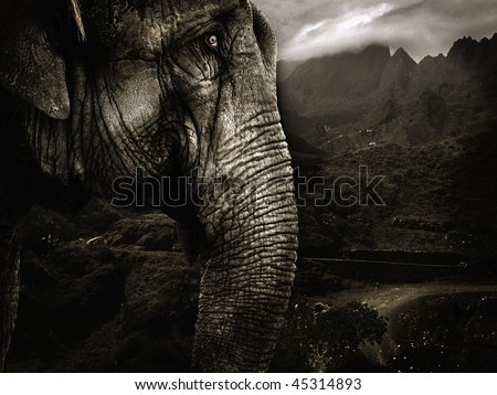 elephant in tropical surroundings - stock photo