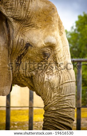 elephant in zoo with warm color tones