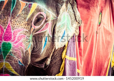Elephant. India, Jaipur, state of Rajasthan. - stock photo