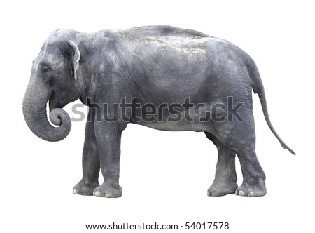 elephant isolated - stock photo