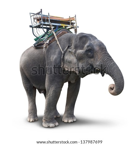 Elephant isolated on white background