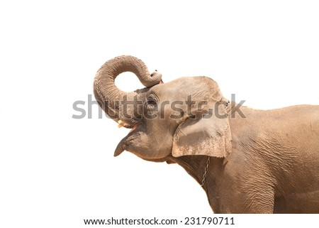Elephant. Isolated on white background - stock photo