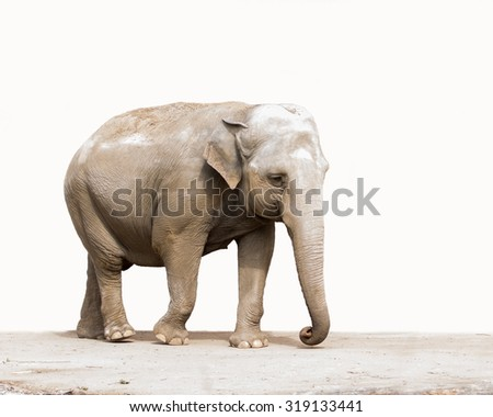 elephant isolatet