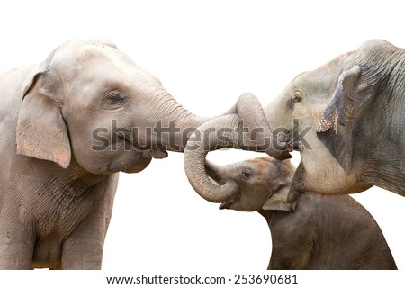 elephant kiss each other on a white background. - stock photo