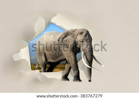 Elephant looking through a hole torn sheet of the paper