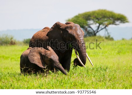 Elephant Mother and Baby Serengeti Tanzania Africa - stock photo