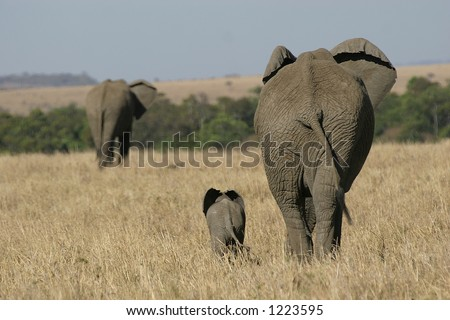 elephant mother and baby walking in grassland - stock photo