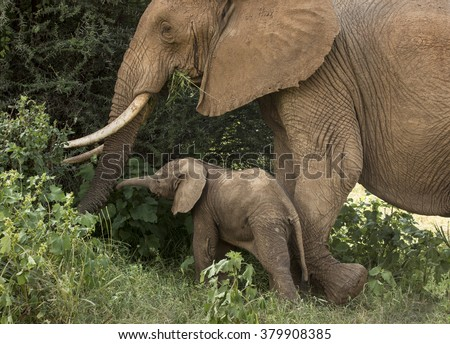 Elephant mother and calf - stock photo