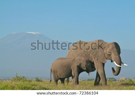 Elephant mother and calf below Mount Kilimanjaro, Kenya - stock photo