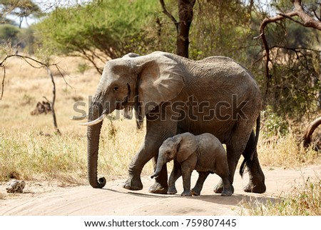 Elephant mother and child in Tarangire NP, Tanzania