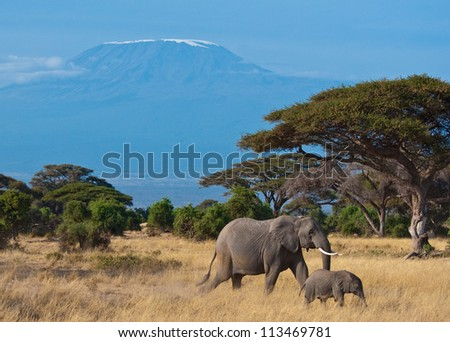 Elephant Mother and Son in Front of the Kilimanjaro Mountain - stock photo