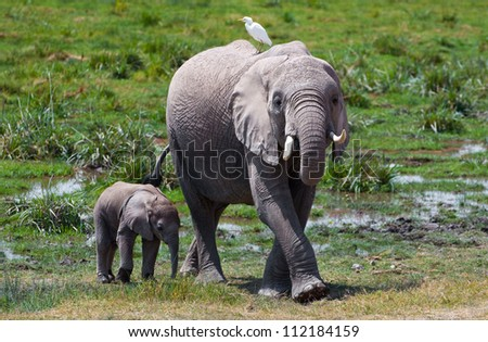 Elephant Mother and Son, Kenya - stock photo