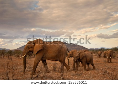 Elephant mother and twins   - stock photo