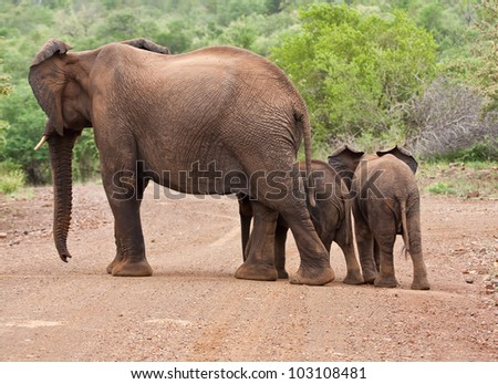 Elephant mother and two babies crossing the road - stock photo