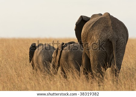 Elephant mother with babies in wild - stock photo