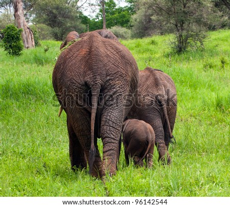 Elephant Mother with Juvenile and Baby Elephants Serengeti Tanzania Africa