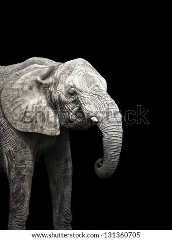 Elephant on black background - stock photo