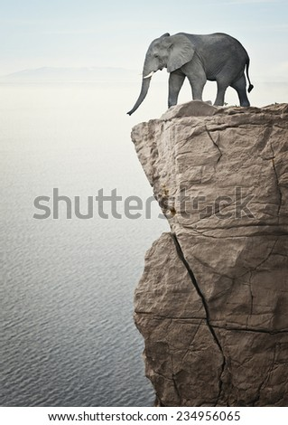 elephant on cliff and sea background - stock photo