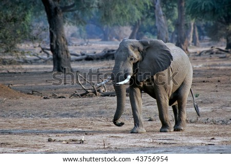 elephant on its way in a park - stock photo