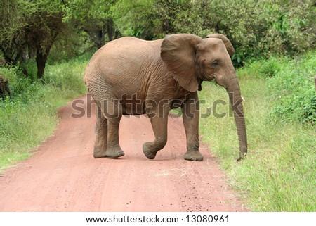 elephant on road - stock photo