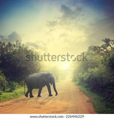Elephant on road and bush with savanna landscape background - stock photo