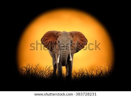 Elephant on the background of sunset - stock photo