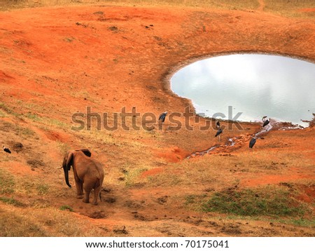 Elephant on the red savannah with birds - stock photo