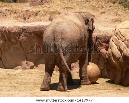 elephant playing with a ball