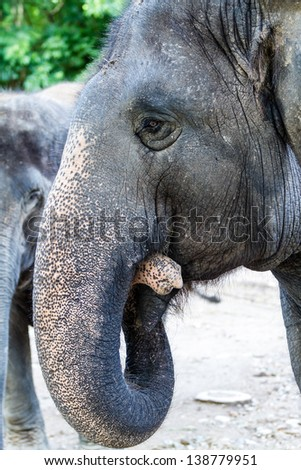 Elephant portrait - stock photo