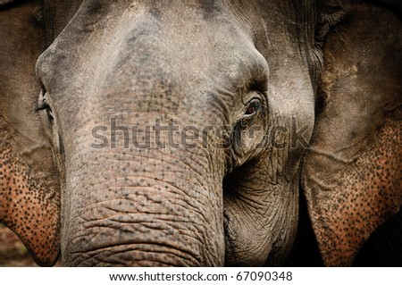 Elephant portrait from Thailand