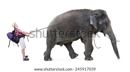 elephant pulls on chain unhappy tourist - stock photo