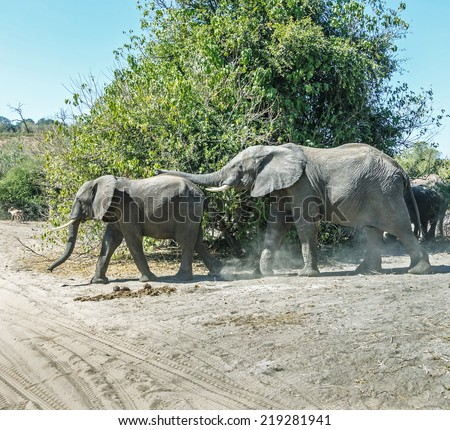 Elephant's family in african savannah in national park Chobe, Botswana, South-Western Africa - stock photo
