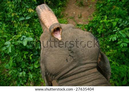 Elephant's trunk - stock photo
