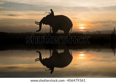 Elephant silhouette during sunset at Surin, Thailand.