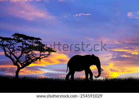 Elephant silhouette in the wild - stock photo