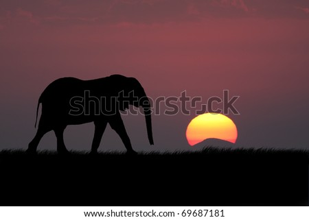 Elephant silhouette with red sunset in south africa - stock photo