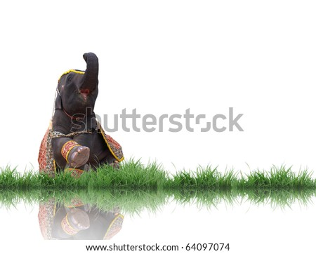 elephant sit down and green grass isolated - stock photo