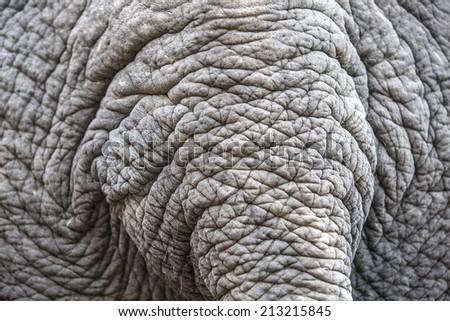 Elephant skin background - stock photo