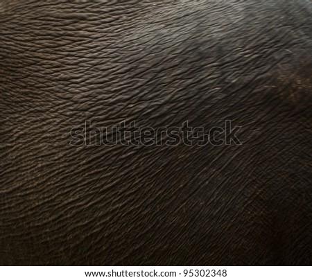 Elephant skin background. - stock photo