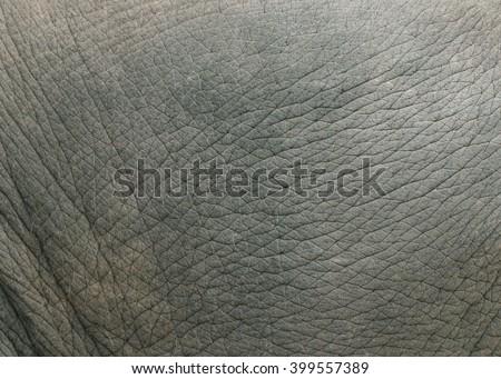Elephant skin texture. - stock photo