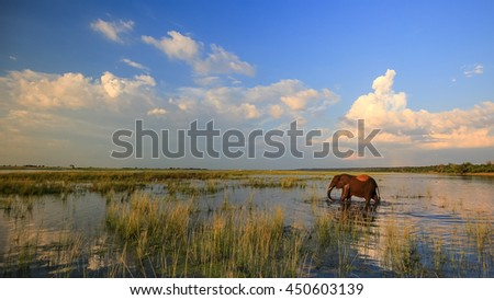 Elephant standing in river water with sunset in background, Africa